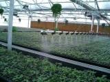 溫州華耀苗床廠家-噴灌機-無極調速噴灌機廠家直銷