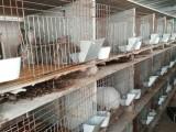 通辽獭兔养殖基地 獭兔养殖成本 散养野兔的周期包技术学习
