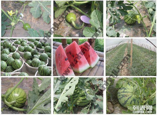 上海农家乐旅游推荐 钓鱼烧烤吃土菜 采摘草莓西瓜