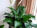 武宁路植物租赁办公室绿植租摆花卉租赁优惠中销售低价高质