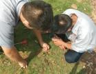大岭山防治白蚁 杀虫灭鼠 找龙科白蚁虫控专业资质认证企业