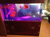 观赏鱼缸观赏鱼出售水族滤材鱼缸清洗布景