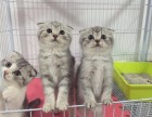 萌宠猫猫多只,健康出售,可致电联系