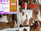 牛饲料育肥饲料肉牛催肥增重快的快育肥素预混料饲料添加剂预混料