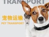 青島托運寵物到喀什專業寵物托運業務