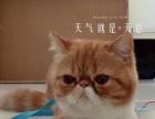加菲猫3800元