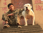 全国连锁双血统杜高犬繁殖基地 本地可上门