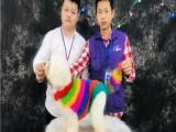 廣州寵物美容培訓學校 派多格