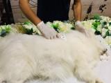 杭州貓咪火化 火葬寵物 貓咪火化