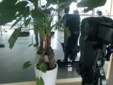 杭州建德花卉绿植租摆植物租赁园林绿化养护,苗圃直发