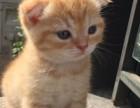 波斯猫一般多少钱 淘宝店铺搜:双飞猫