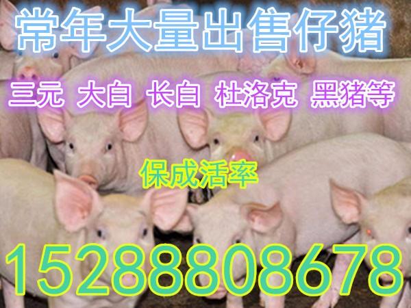 4ba49d484aa12b443527b1bdff967dc4.jpg