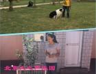 郁花园家庭宠物训练狗狗不良行为纠正护卫犬订单