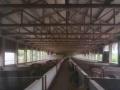 优越区位成熟标准化养猪场出售