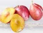 佛山百森水果加盟费条件