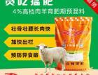 肉羊快速育肥添加剂肉羊育肥期上膘快用英美尔贪吃猛肥