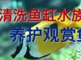 腾龙水族专业清洗鱼缸鱼缸维修维护鱼缸鱼缸搬家