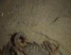 众生金蝎养殖 众生金蝎养殖加盟招商