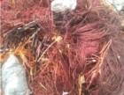 平阴废电缆回收废铜回收价格