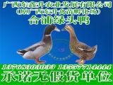 贵州禽苗孵化厂_专业贵州鸭苗市场价格情况