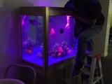 深圳哪里有水族公司,上门清洗鱼缸护理观赏鱼养护