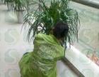 青岛花卉租摆、绿植盆景租摆、绿化施工养护。十盆起租