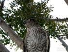 我也不知道叫什么鸟