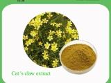 绿洲植物厂家供应 猫爪草提取物 10:1 质量保证