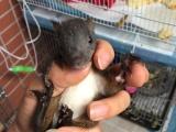 合格魔王幼崽松鼠