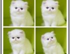 猫舍出售纯血统加菲猫 寻找新主人家庭式繁育可上门挑选