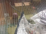 阳江市区出一只金花松鼠