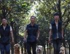 长沙专业训犬基地,长沙狗狗训练学校,长沙训犬基地
