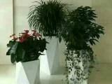 北京花卉租擺公司養護公司