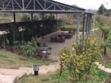 成都周边认种果林40亩土地出租采摘观光园果园免第一年租金招租