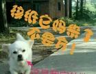白色串串狗12月8日出生,一百一只。