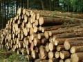 天津进口木材清关注意事项