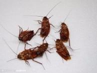 咸阳除虫灭蟑螂 灭老鼠服务 地毯 沙发 地面清洗 家政