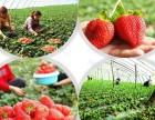 满城满军有机草莓园