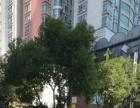 上城金都 领域大厦 万达广场 金满地 标准公寓房出租!