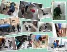 上海南汇六灶专业管道疏通,管道清洗,清理隔油池,改装下水道