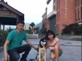 天津訓犬師培訓學校寵物老師訓練學習訓狗老師培訓基地