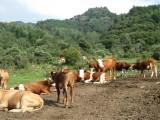 贵州农村养鸡场资产评估养猪场价值评估养殖场损失评估
