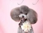 什么是宠物美容师-杭州爱可宠物美容培训