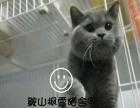 枫雪猫舍种公对外借配
