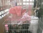 出售粉红狗笼子一个