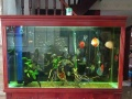 鱼缸,家庭鱼缸,办公室鱼缸,公司鱼缸,酒店鱼缸