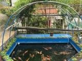 锦鲤景观风水鱼池设计施工