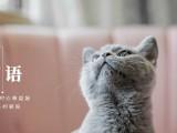 安康支持视频看猫 全国免费送货上门