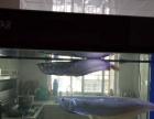 家养60公分银龙,红鱼,蓝鲨,鱼缸出售
