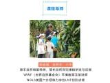 广州短途带娃旅游,小小植物学家,亲子一日游